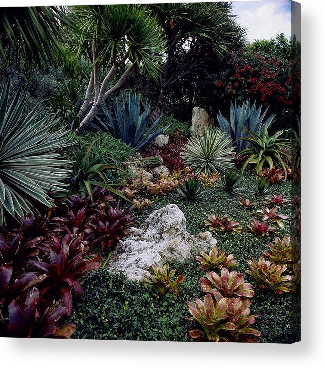 Tropical Garden West Palm Beach Fl Acrylic Print By Richard Felber