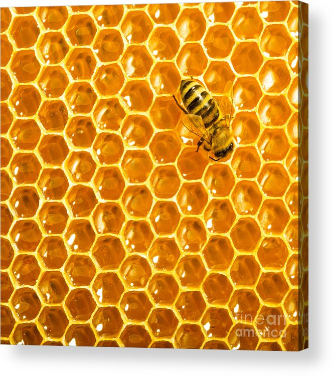 Bee Acrylic Print featuring the photograph Working Bee On Honeycells by Studiosmart