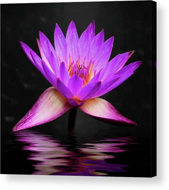 3scape Acrylic Print featuring the photograph Lotus by Adam Romanowicz