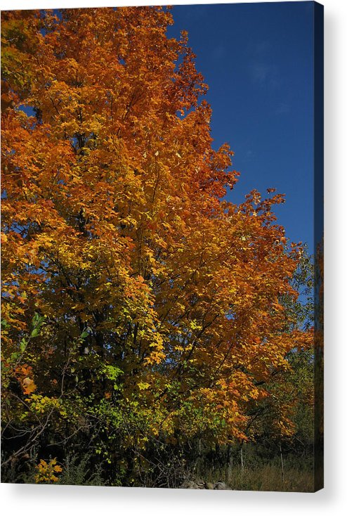 Leaves Acrylic Print featuring the photograph Fall 21 by Jim Lorriman