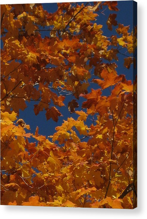 Leaves Acrylic Print featuring the photograph Fall 25 by Jim Lorriman