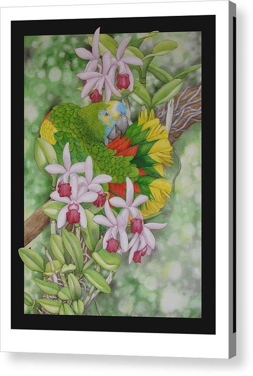 Orchids Acrylic Print featuring the painting Amazon 3 by Darren James Sturrock