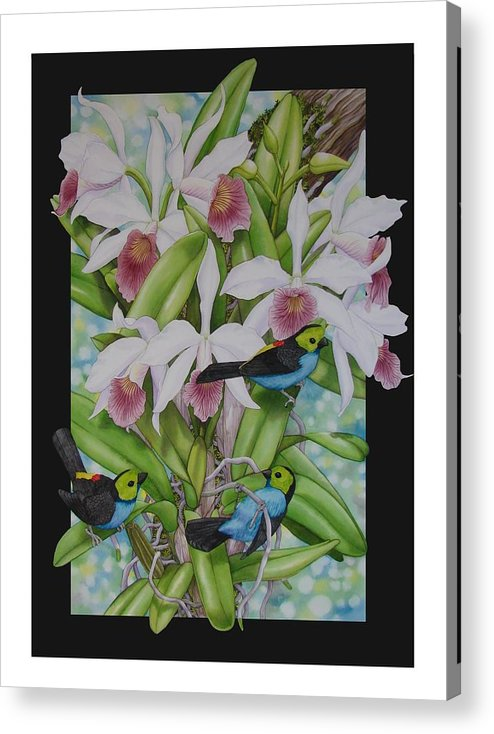 Orchids Acrylic Print featuring the painting Laelia Purpurata by Darren James Sturrock