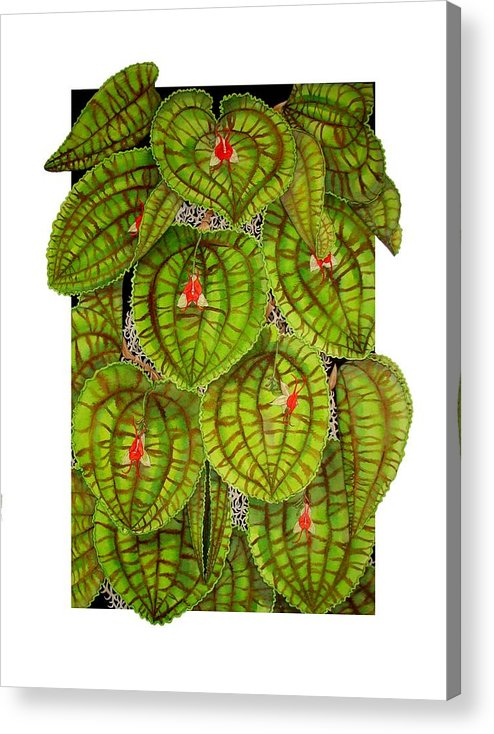 Orchid Acrylic Print featuring the painting Lepanthes Calodictyon by Darren James Sturrock