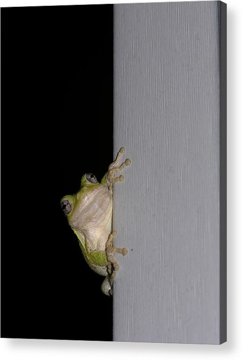 Nature Acrylic Print featuring the photograph Tree Frog by Anna Dubon