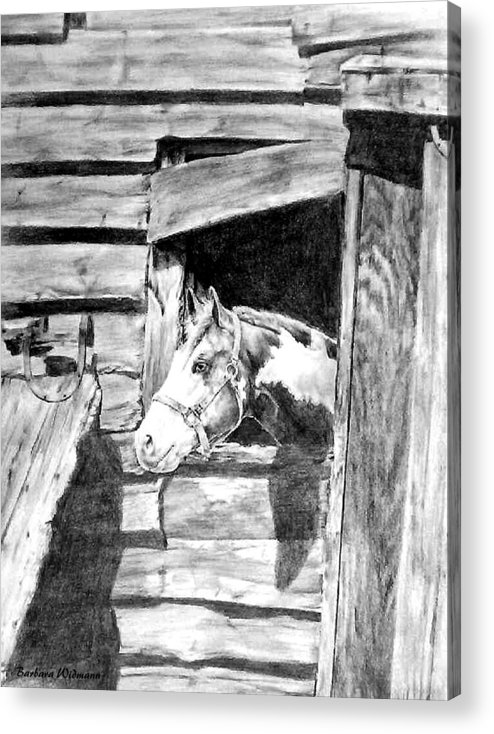 Horses Acrylic Print featuring the drawing Strawberry by Barbara Widmann