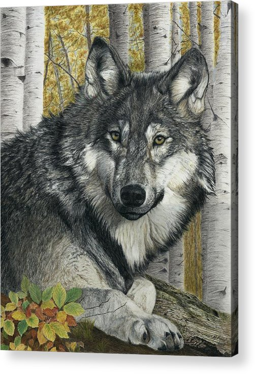 Wolf Acrylic Print featuring the painting Alpha Male by Marlene Piccolin