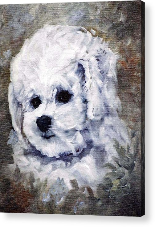 Animal Acrylic Print featuring the painting Little Bichon by Jimmie Trotter