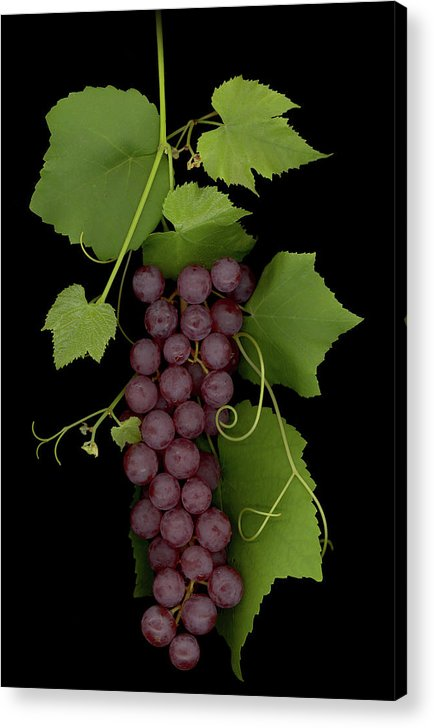 Grapes Acrylic Print featuring the mixed media Fruit Of The Vine by Sandi F Hutchins