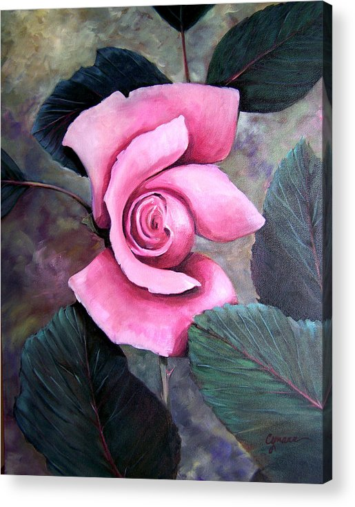 Rose Floral Pink Oil Painting. Oil Acrylic Print featuring the painting Generational Rose by Cynara Shelton