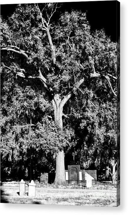 Savannah Graves Acrylic Print featuring the photograph Savannah Graves by John Rizzuto