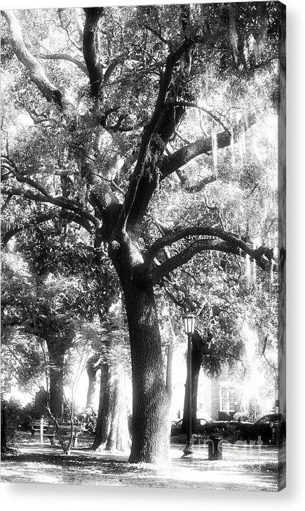 Savannah Oak Acrylic Print featuring the photograph Savannah Oak by John Rizzuto