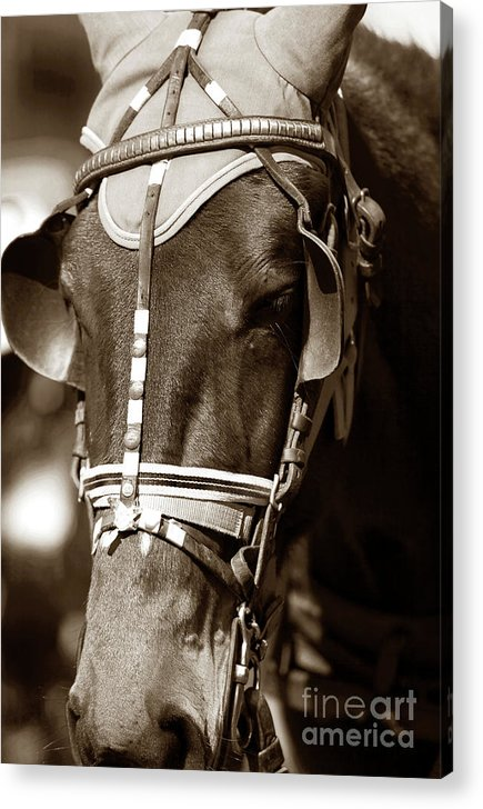 Horse Face Acrylic Print featuring the photograph Horse Face by John Rizzuto