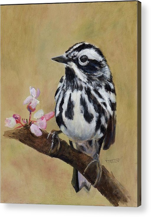 Animal Acrylic Print featuring the painting Black and White Warbler by Jimmie Trotter