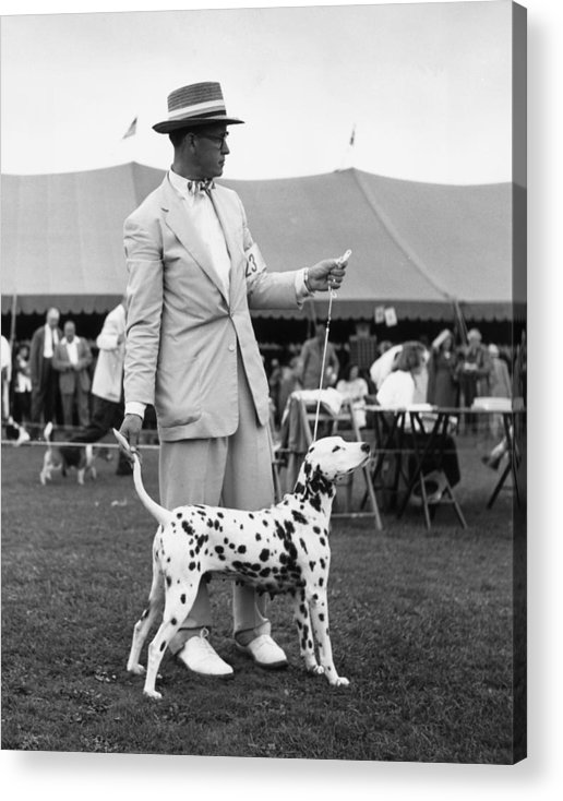 Pets Acrylic Print featuring the photograph Showing Off by Slim Aarons
