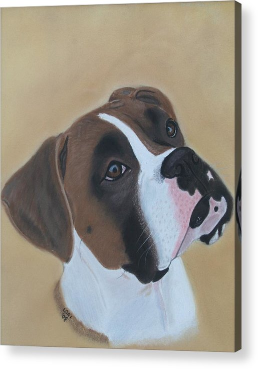 Boxer Acrylic Print featuring the painting Boxer Portrait by Lori DeBruijn