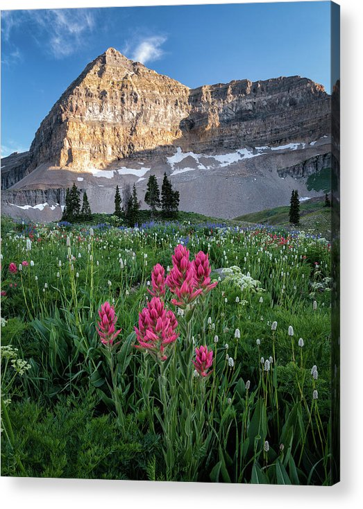 Wildlfowers Acrylic Print featuring the photograph Mount Timpanogos Wildflowers by James Udall