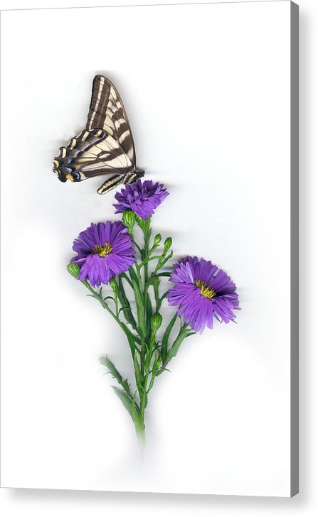 Aster Flower Acrylic Print featuring the mixed media Aster And Butterfly by Sandi F Hutchins