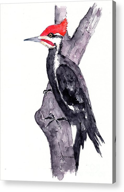 Pileated Woodpecker in tree by Claudia Hafner