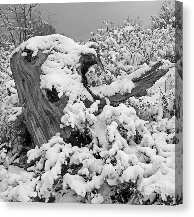 Lake Arrowhead Winter Canvas Print featuring the photograph Fresh Snow On A Tree Stump by Kenny Bosak