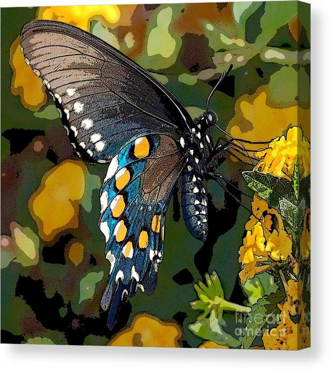 Pipevine Canvas Print featuring the photograph Pipevine Swallowtail Butterfly by David Smith