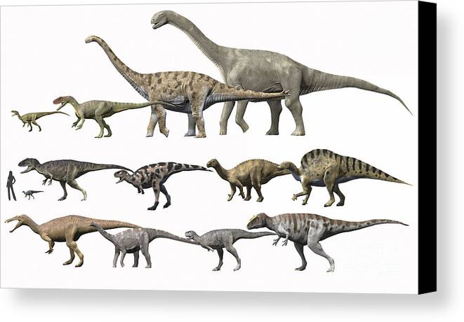 Comparison Canvas Print featuring the digital art Prehistoric Era Dinosaurs Of Niger by Nobumichi Tamura