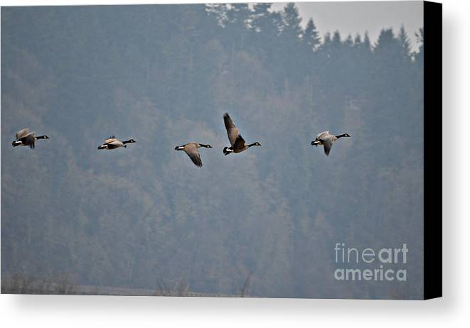 Landscape Canvas Print featuring the photograph Take Off by Jan Noblitt