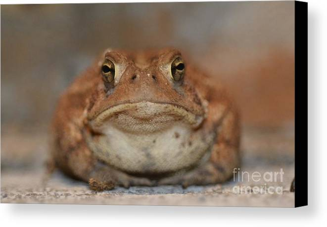 Toad Canvas Print featuring the photograph The Tennessee Toad by Jane McBride