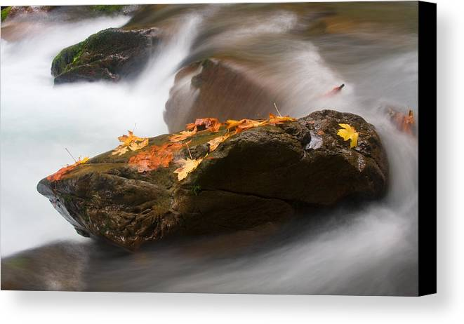 Leaves Canvas Print featuring the photograph Autumn Resting Place by Mike Dawson
