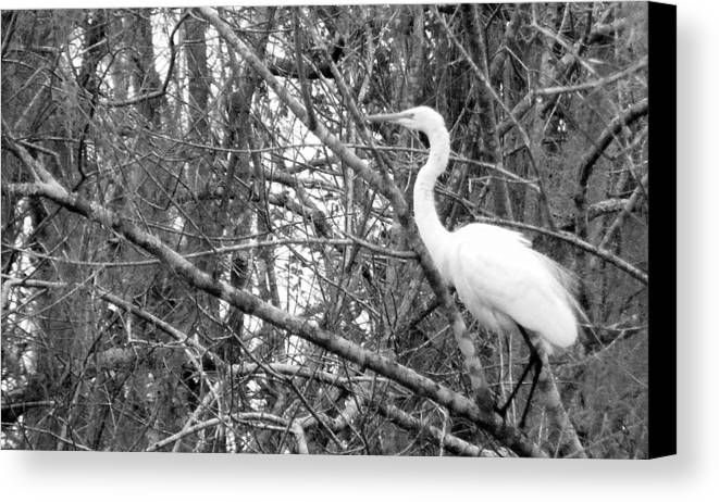 Bird Canvas Print featuring the photograph Camouflage by Ed Smith