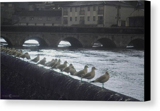 Birds Canvas Print featuring the photograph Line Of Birds by Tim Nyberg