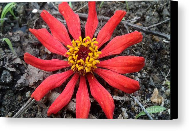 Flower Canvas Print featuring the photograph The Beauty by Dushanthan Rajendren