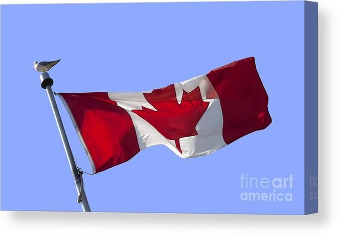 Canadian Flag Canvas Print Canvas Art By Blink Images
