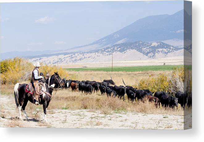 Cowboy Canvas Print featuring the photograph Moving The Herd by Fran Riley