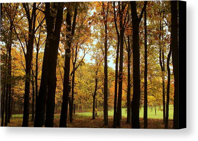 Autumn Canvas Print featuring the photograph Glowing Through The Trees by Rosanne Jordan