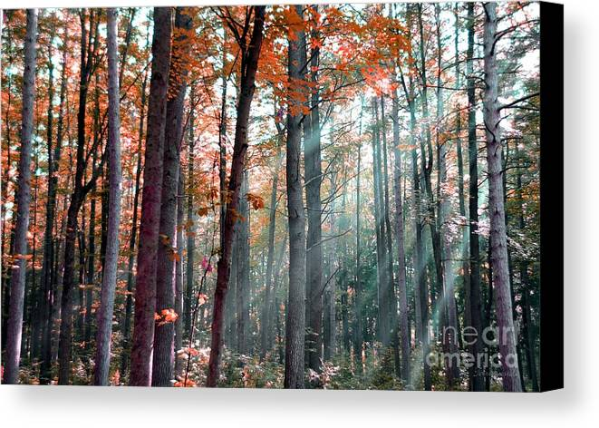 Light Canvas Print featuring the photograph Let There Be Light by Terri Gostola
