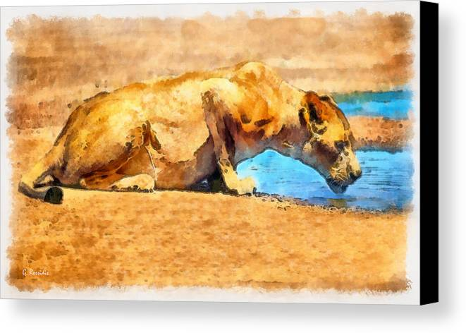 Rossidis Canvas Print featuring the painting Lioness Drinking by George Rossidis