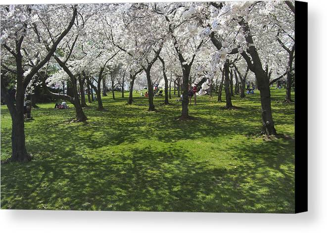 Cherry Blossoms Canvas Print featuring the photograph Under The Cherry Blossoms - Washington Dc. by Mike McGlothlen