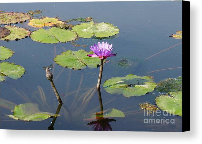 Dragon Fly Canvas Print featuring the photograph Water Lily And Dragon Fly One by J Jaiam