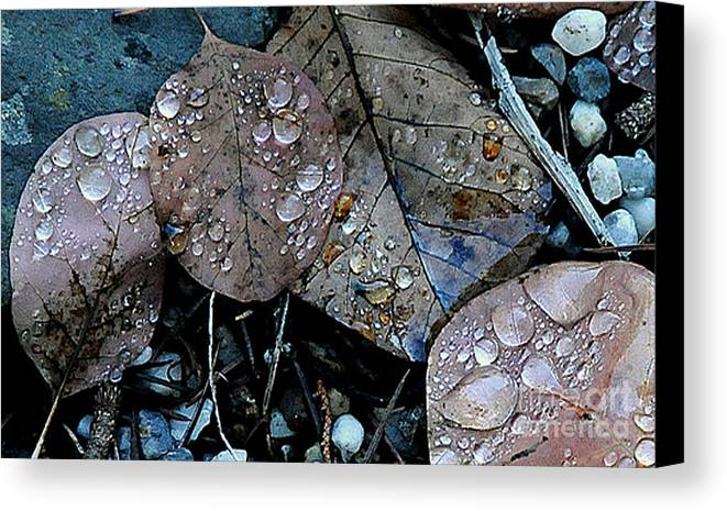 Wet Leaves Canvas Print featuring the photograph Wet Leaves by Artist and Photographer Laura Wrede