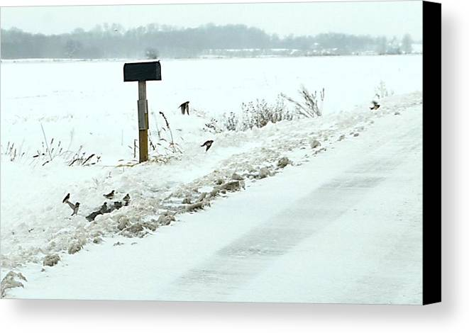Indiana Scenes Canvas Print featuring the photograph Winter Foragers by Julie Dant