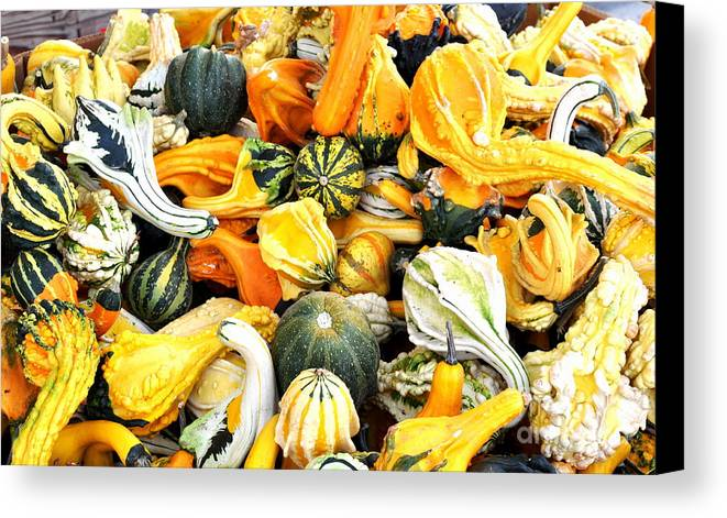 Gourd Canvas Print featuring the photograph Gourds And Squash by Tanya Searcy