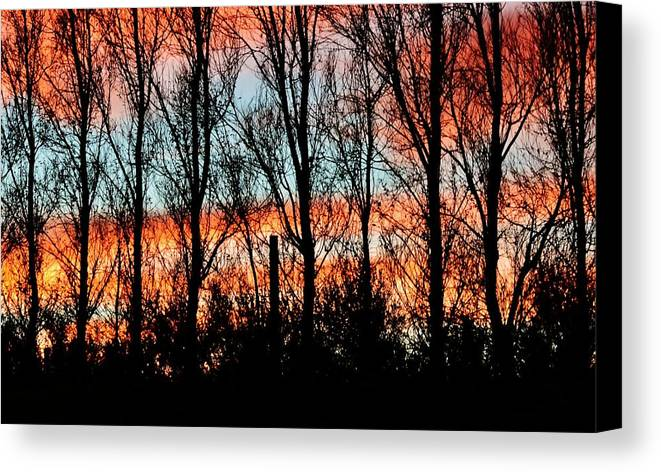 Sunrise; Red; Clouds; Leafless; Trees; Swartland; South Africa; Early; Morning Light; Nature; Sky; Blue; Black; Plants; Background; Decorative; Wood; Branches; Canvas Print featuring the photograph leafless Trees by Werner Lehmann