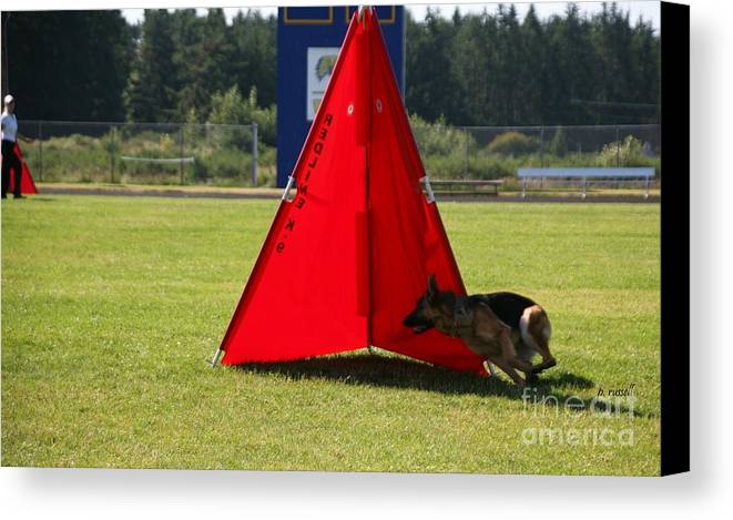 Schutzhund Canvas Print featuring the photograph P-0152 by P Russell