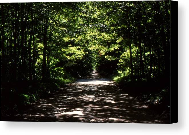 Forest Canvas Print featuring the photograph Summer Day by Lyle Crump