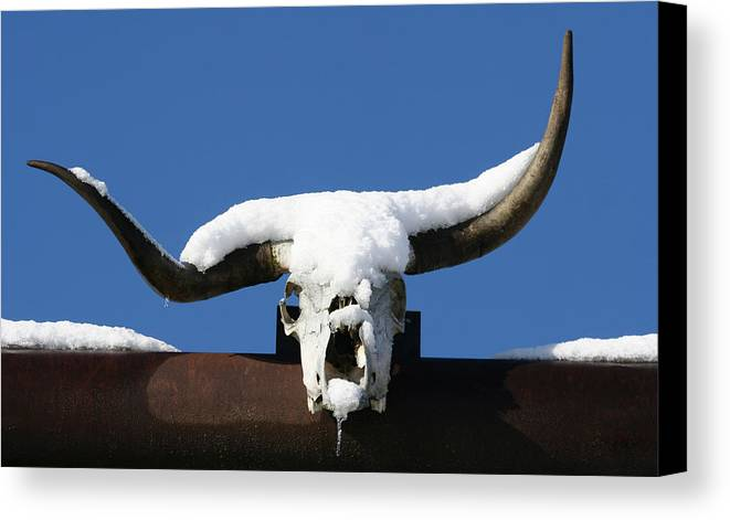 Horns Canvas Print featuring the photograph Brain Freeze by Holly Ethan