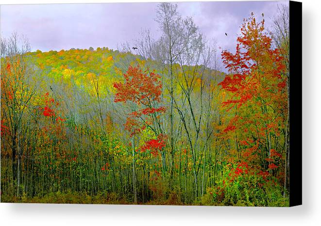 Autumn Canvas Print featuring the photograph Climb Into Autumn by Diana Angstadt