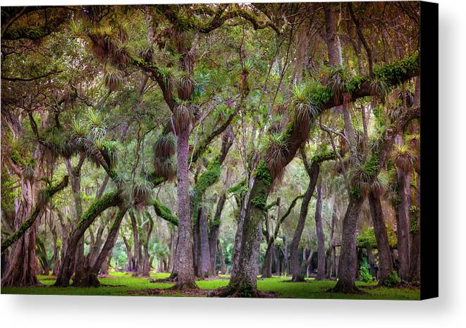 Everglades Canvas Print featuring the photograph Evergreen by Karen Wiles
