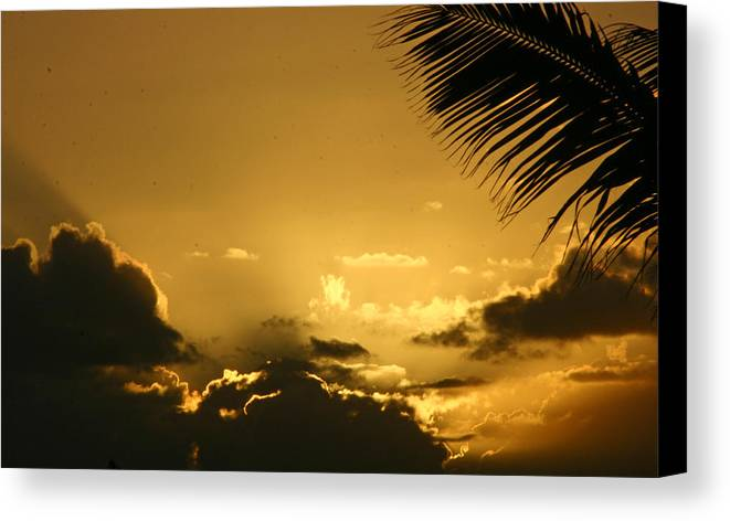 Tropical Canvas Print featuring the photograph Golden Sunset by Doug Johnson