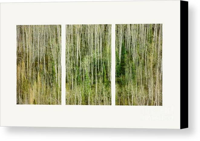 Lines Canvas Print featuring the photograph Hillside Forest by Priska Wettstein